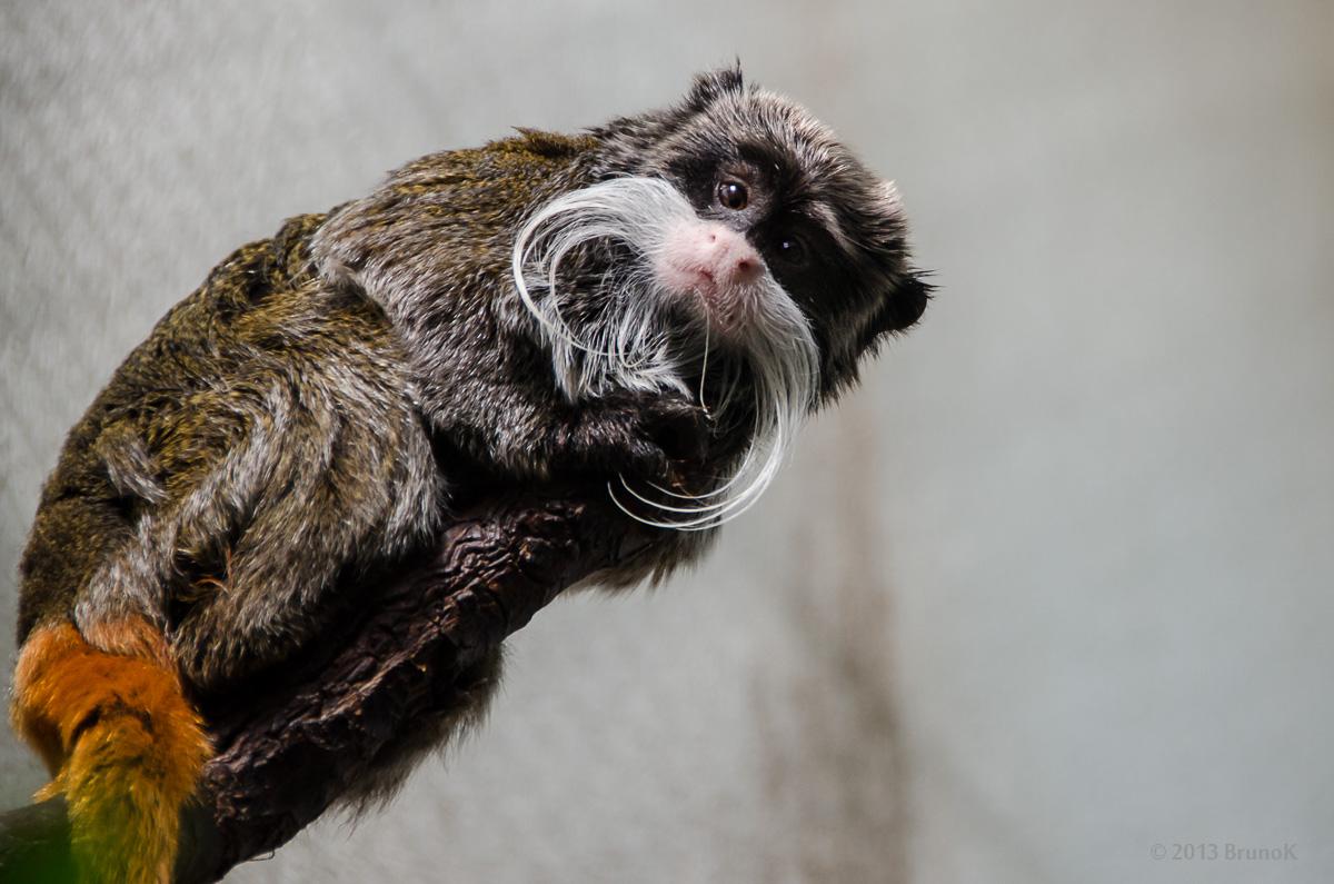zoo zürich wie viele tiere